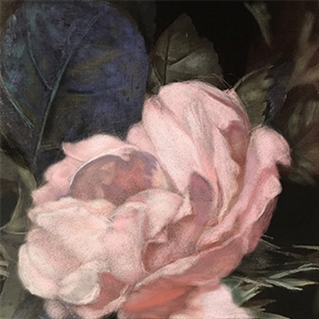 Roger Beale - Soft Rose