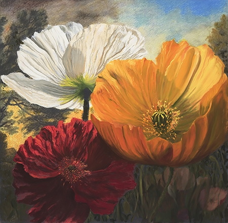 Roger Beale - Sunset Poppies
