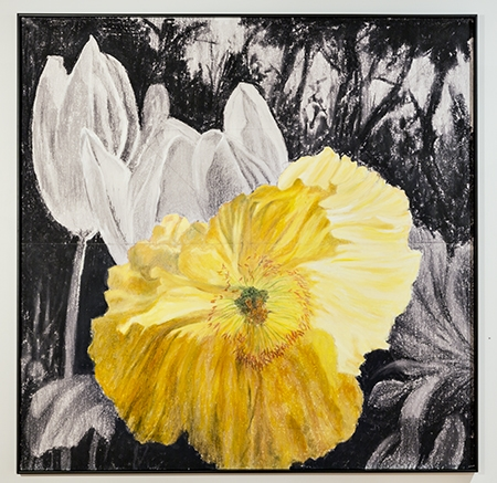 Roger Beale - Yellow Poppy